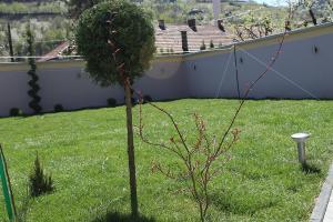 Smaragd travnik uređenje dvorišta zenica 22