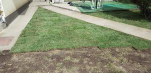 postavljanje busjena travnik 10
