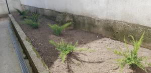 postavljanje busjena travnik 5